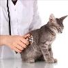 Ветеринарные клиники в Пустошке